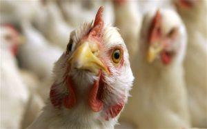 Bird Flu Types of Flu