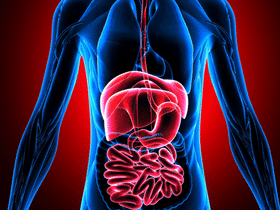 GI Tract Health & Problems